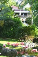 Réduction photo IF000059.jpg. Guadeloupe / Deshaies / Flaman...